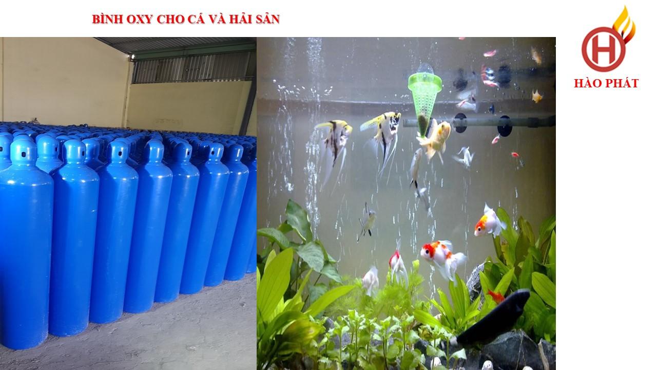địa chỉ cho thuê oxy cá | thuê bình khí oxy cá hải sản